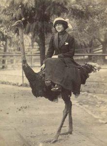 ostrich cab