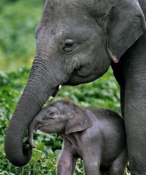 elephant attachment