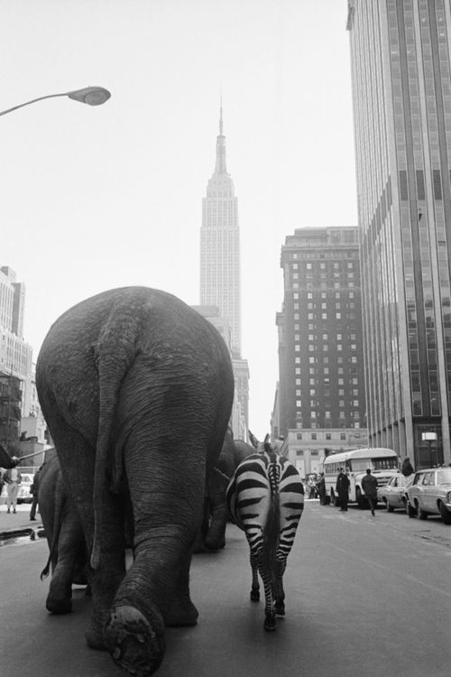 NYC 1968 Circus in town