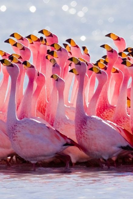 Flamingos. Alex Shar