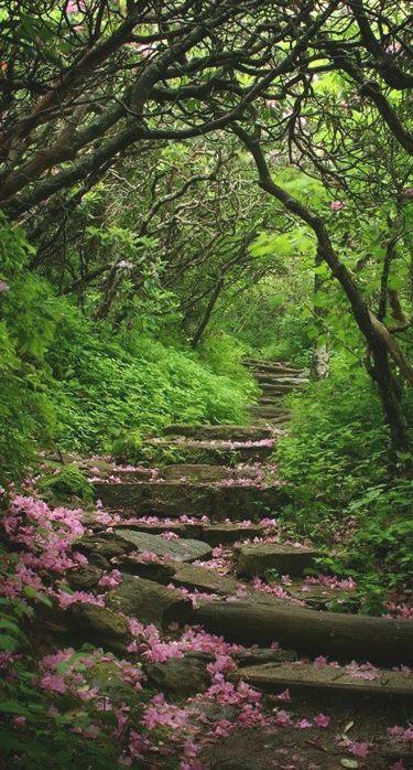 Craggy Garden on Blue Ridge Pkwy NC July04Girl