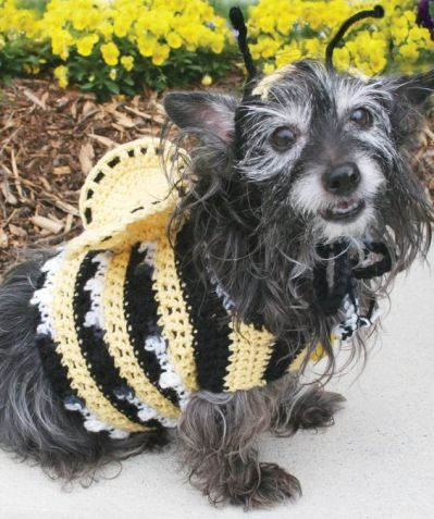 http://www.redheart.com/free-patterns/dogs-crochet-bumble-bee-costume