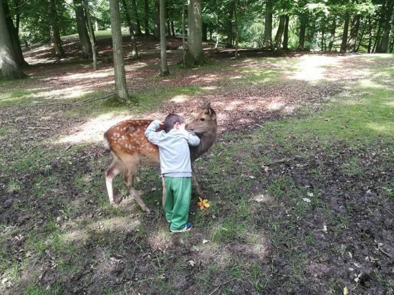 Deer hug SmadarHaplerinEpshtein