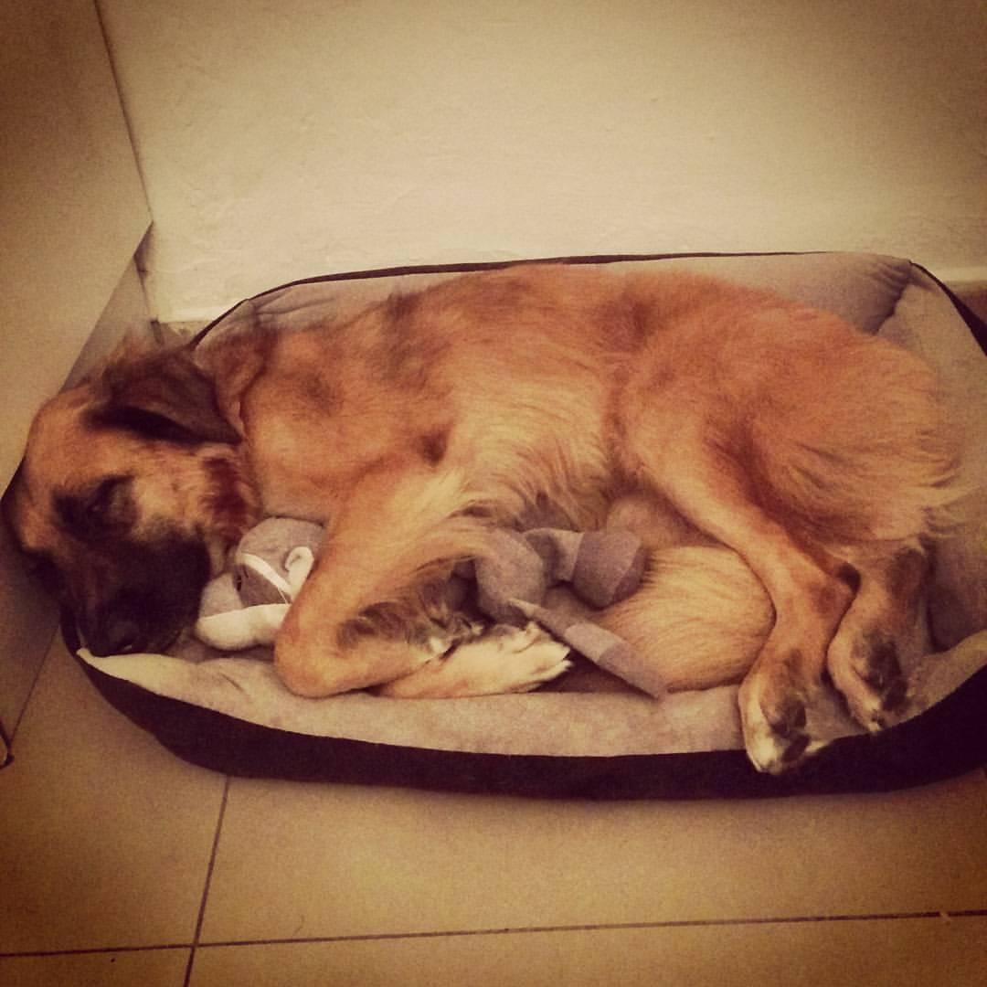 Joey asleep InbarAsif