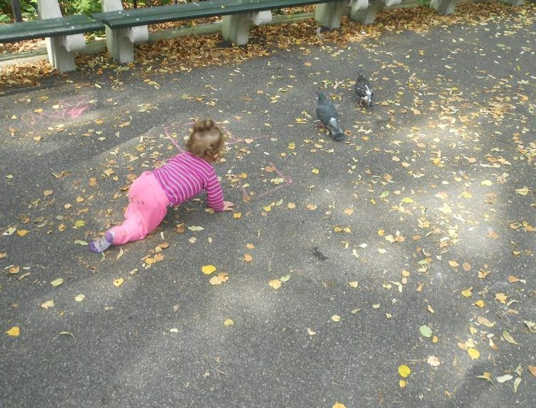 chasing pigeons1