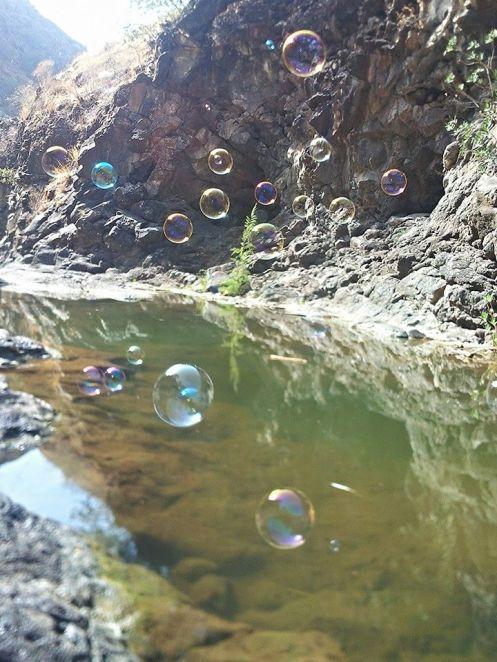 bubbles AK