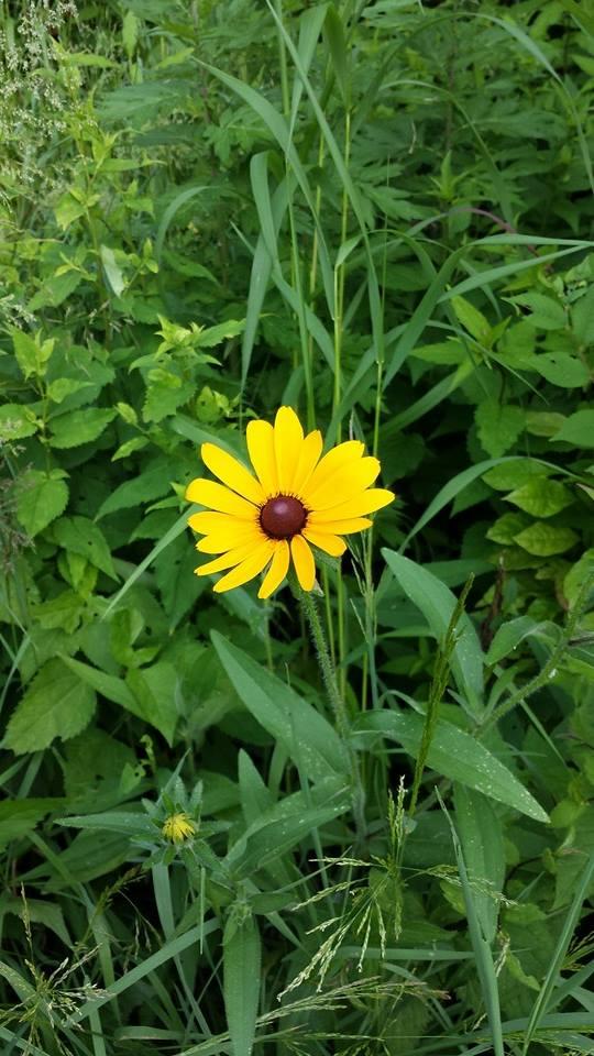 Flower NYC NaamaYehuda