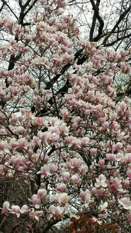 NYC Spring NaamaYehuda
