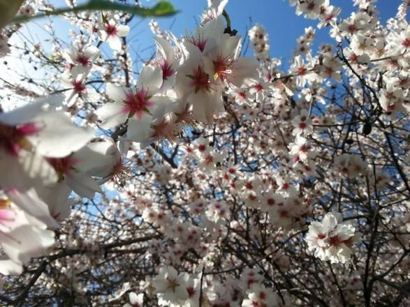 Bloom2 AtaraKatz