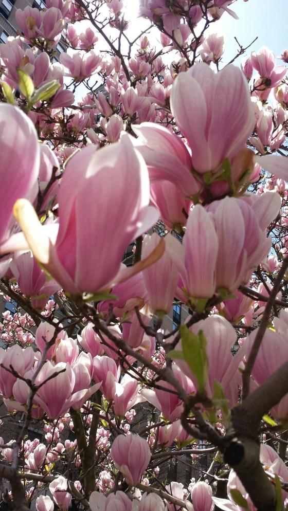 Spring NY4