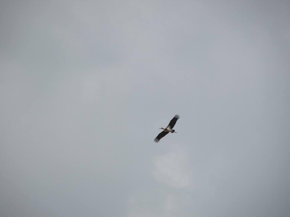 Stork AtaraKatz