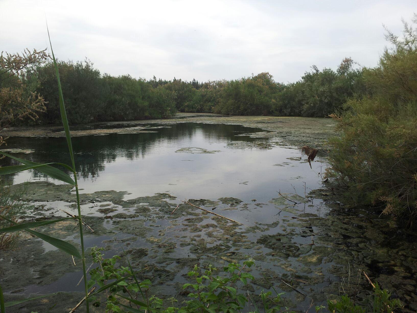 Swamp view SmadarHalperinEpshtein