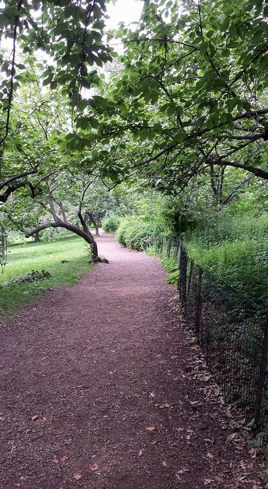 Mulch path Central Park NaamaYehuda
