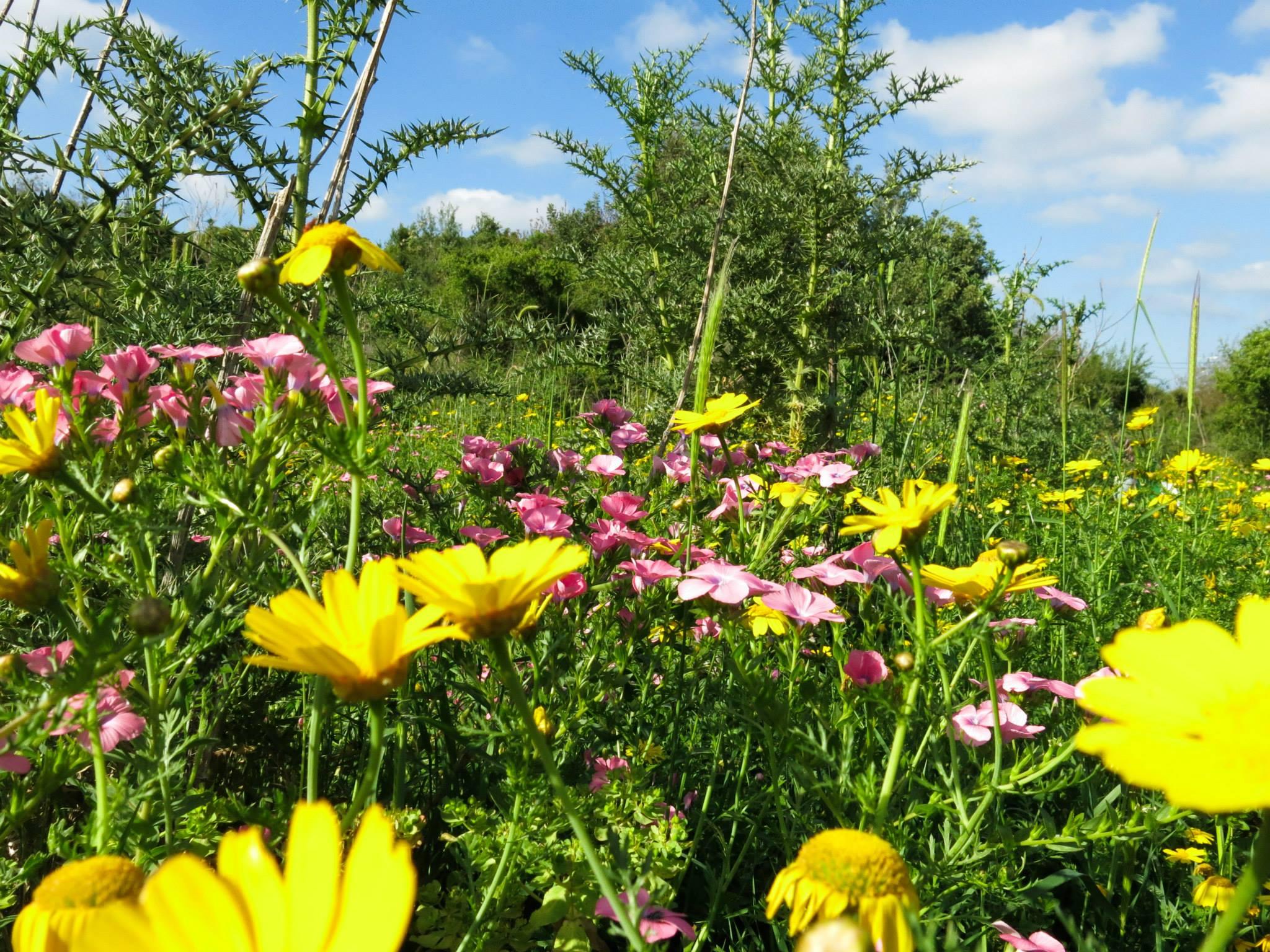 Spring flowers AmitaiAsif