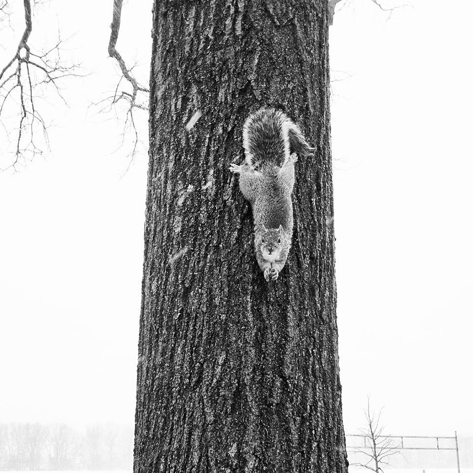 Squirrel InbarAsif
