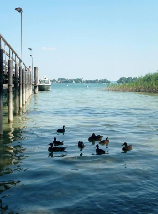 ducks SmadarHalperinEpshtein