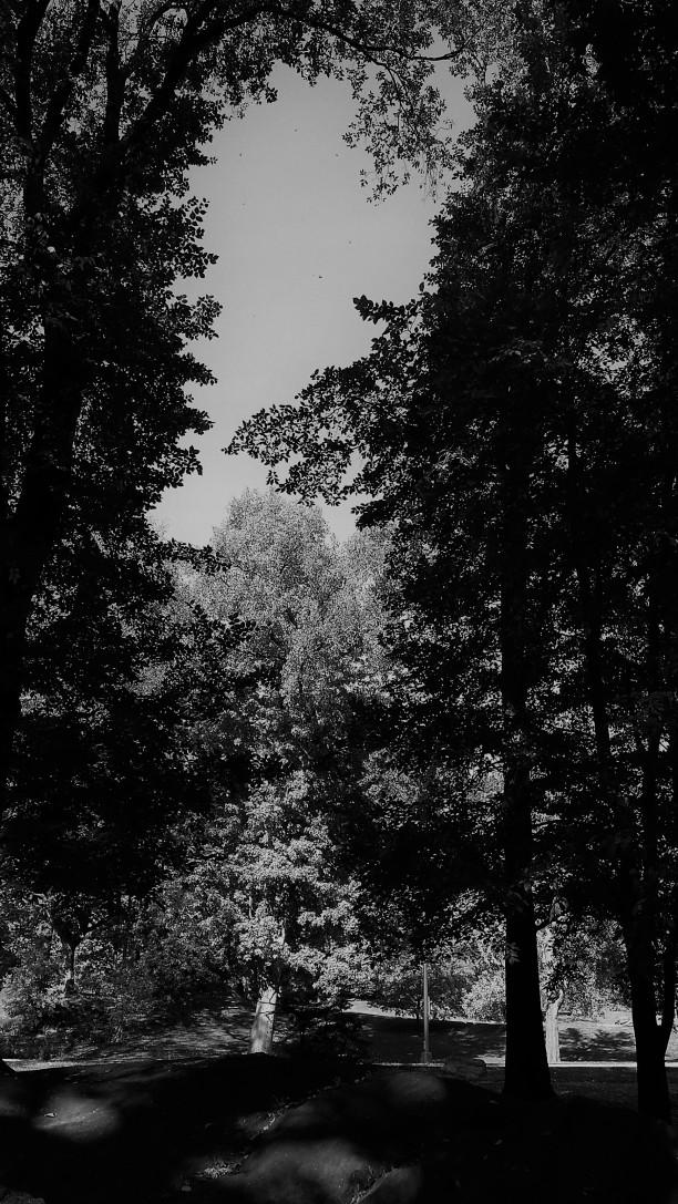 Colorless park NaamaYehuda