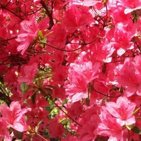 Pink park NaamaYehuda