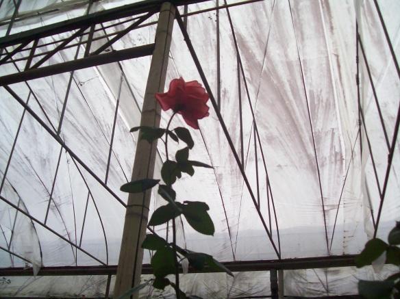 Rose AvivRozenZvi
