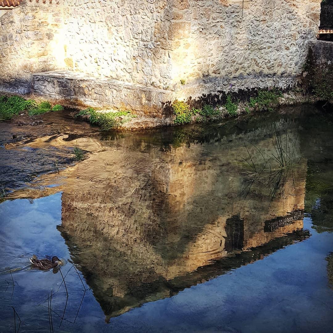 duck reflection InbarAsif
