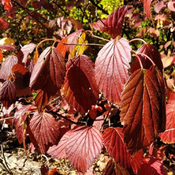 Fall CentralPark NaamaYehuda