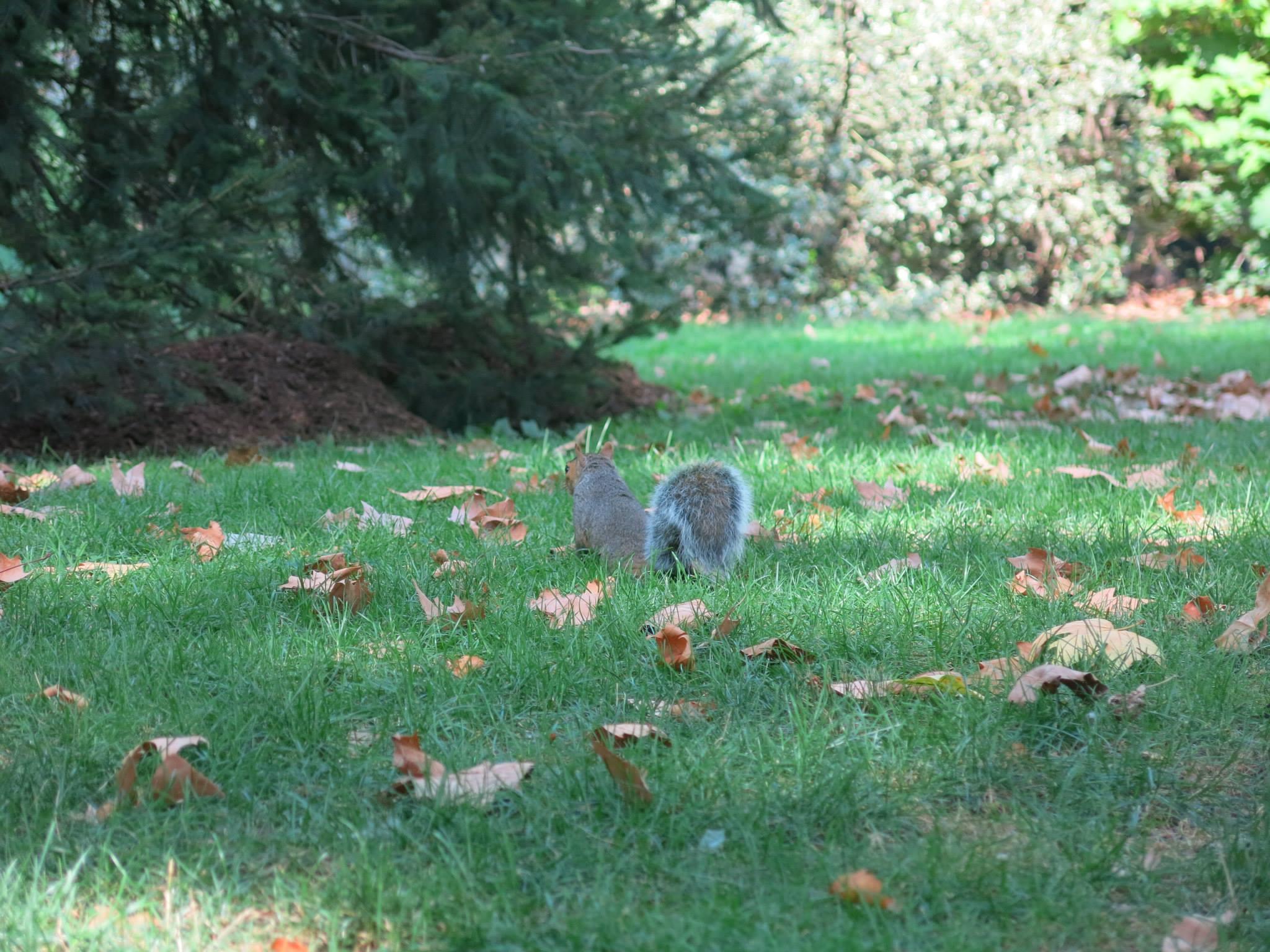 Central Park Squirrel AmitaiAsif