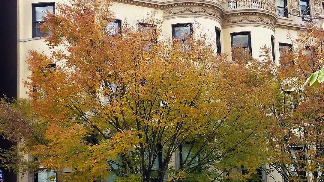 Foliage NYC UWS NaamaYehuda2
