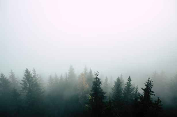 aerial photography of tree surrounded with fogs