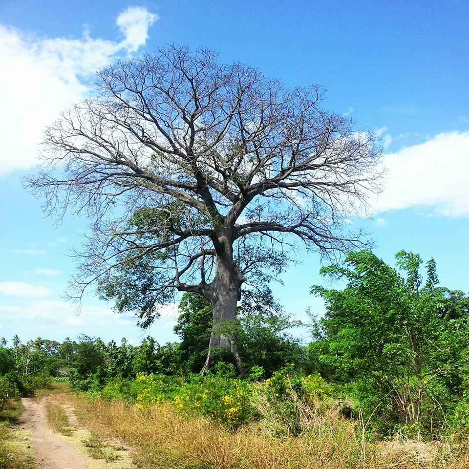 the tree amitaiasif