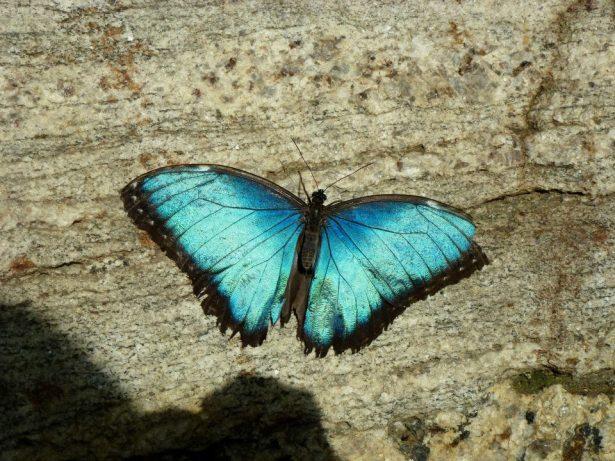 butterfly SmadarHalperinEpshtein