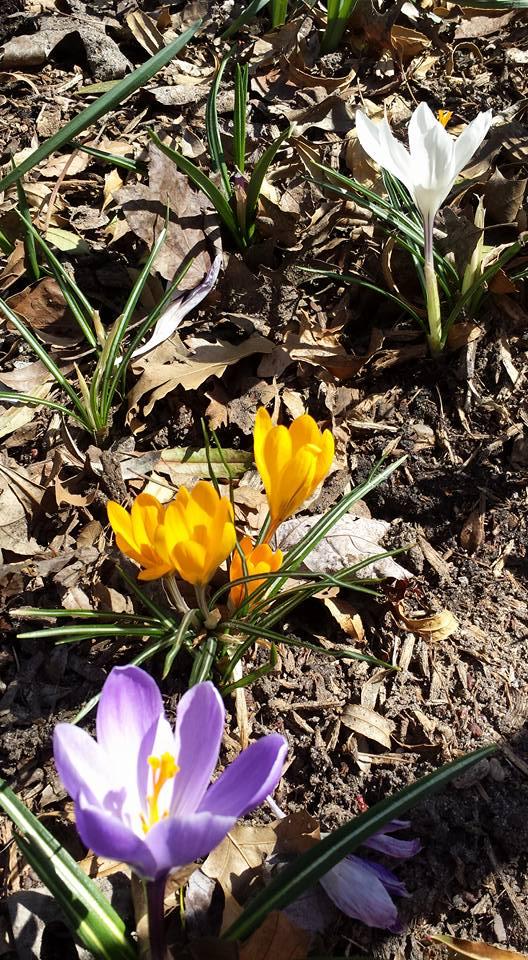 Central Park early spring NaamaYehuda