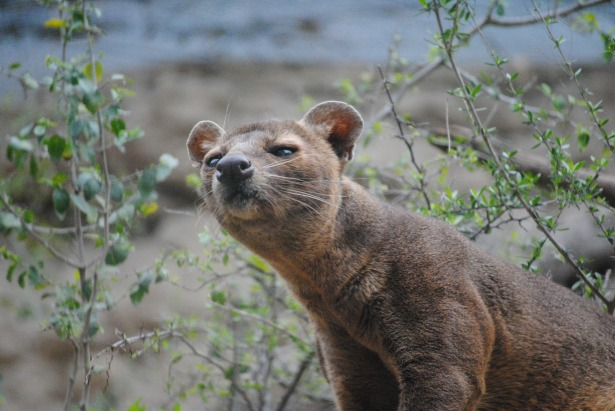 fossa-676878_1920 SeaReeds from Pixabay