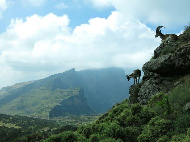 Ethiopia OfirAsif11