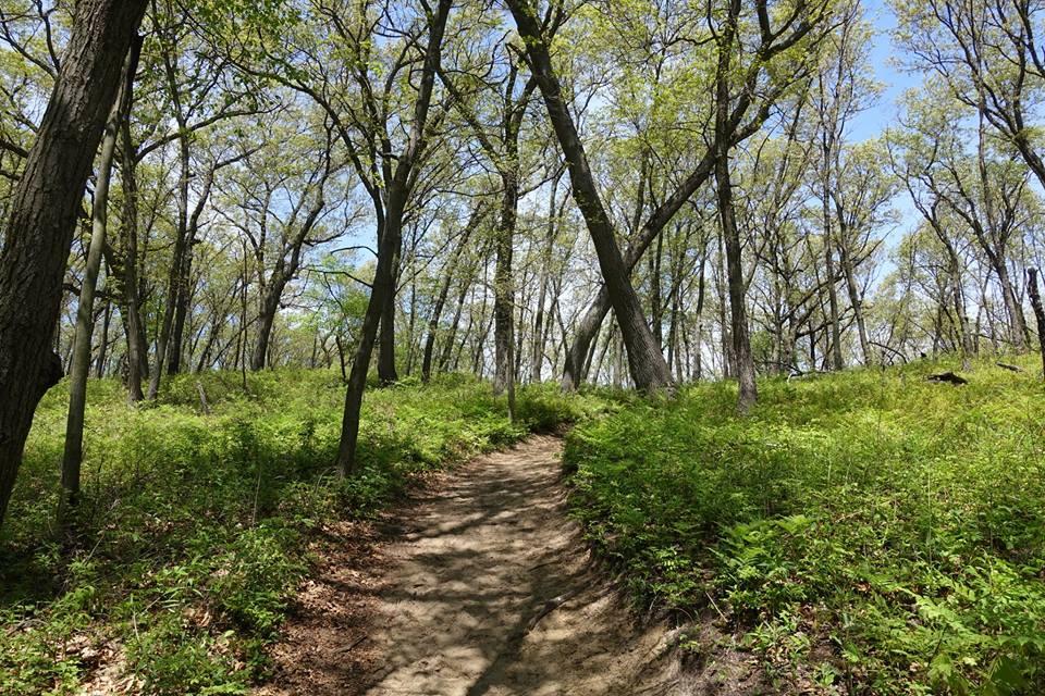 sun shade path PhilipCoons