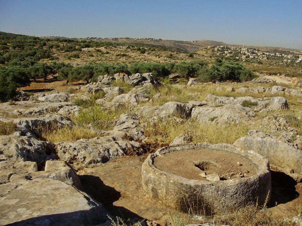 Yam lower stone for crushing olives AmitaiAsif