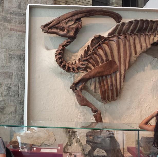 Pharaohsaurus NaamaYehuda