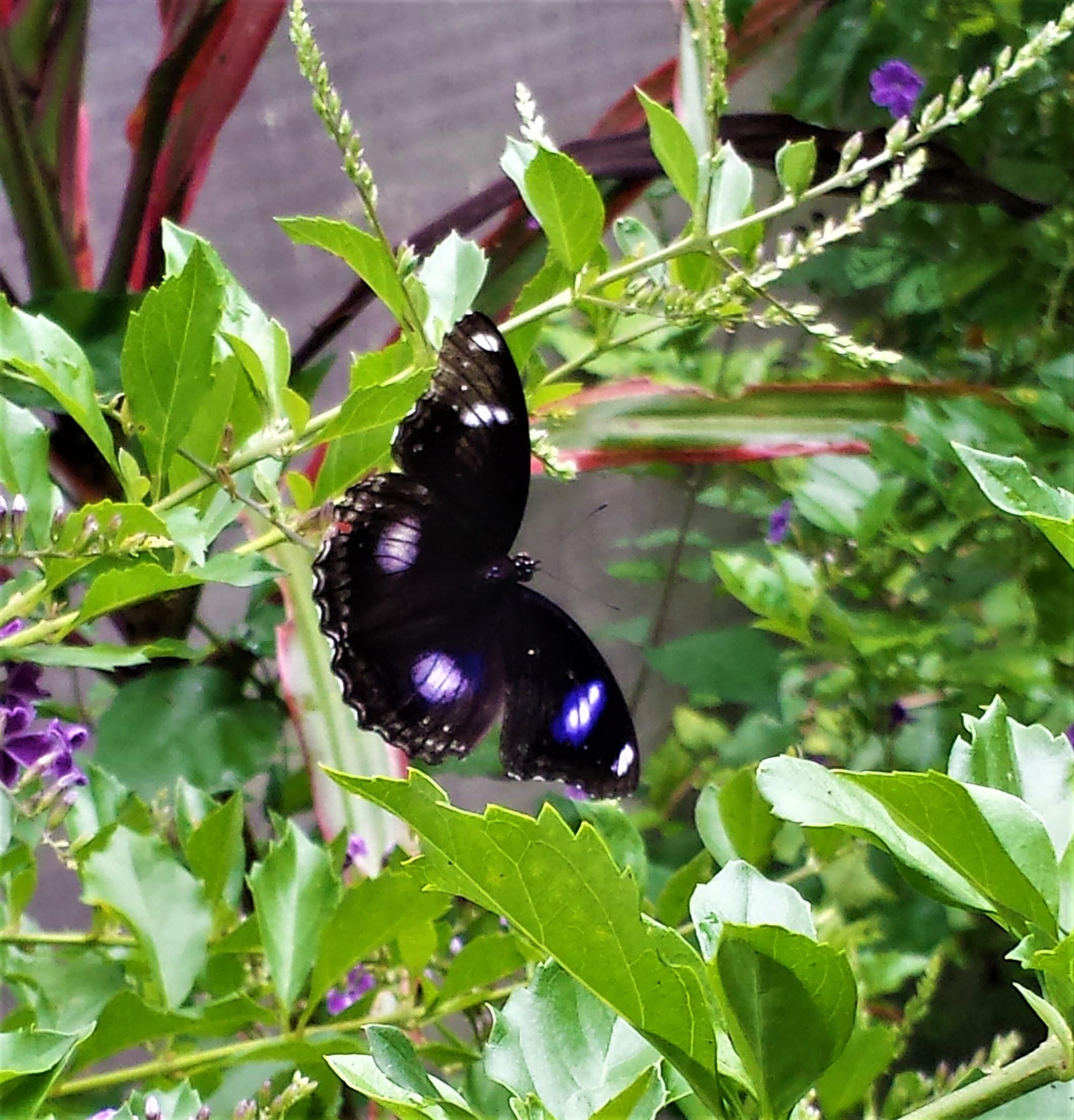 On delicate wings NaamaYehuda