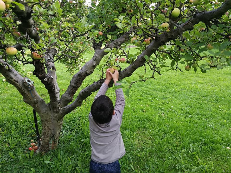 apple picking SmadarHalperinEpshtein
