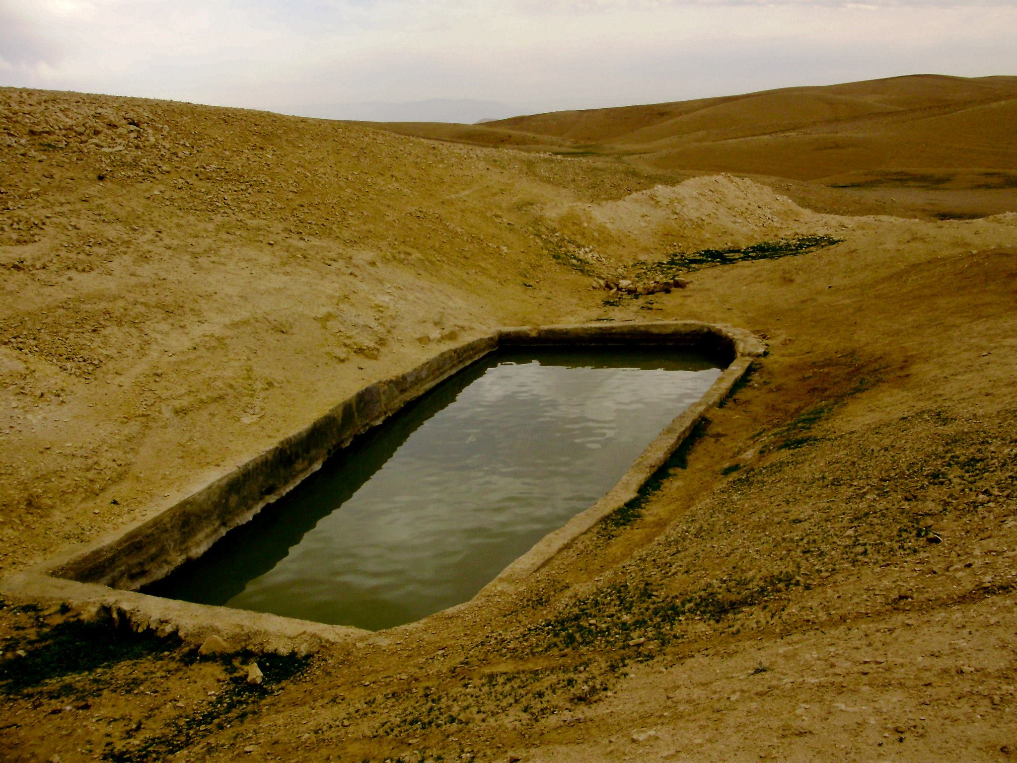desert pool AmitaiAsif