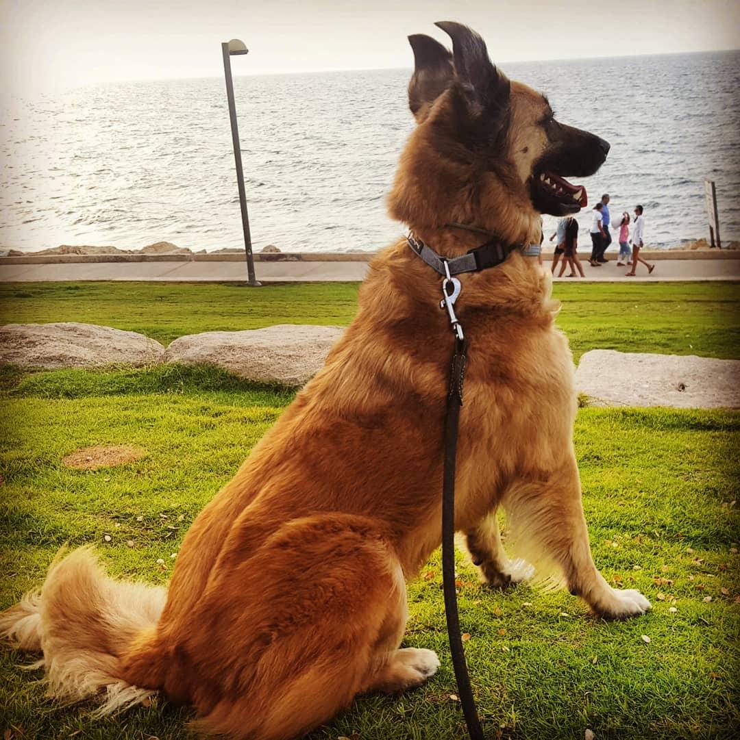 joey at the beach InbarAsif