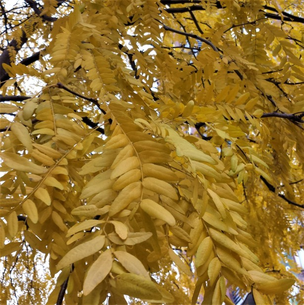 YellowLeaves NaamaYehuda