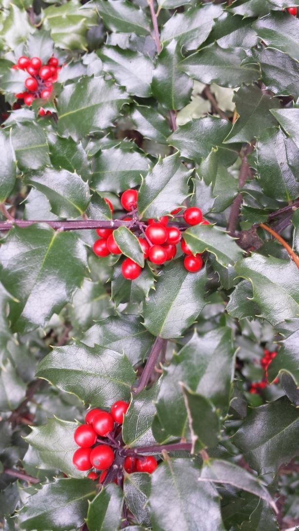Mistletoe NaamaYehuda