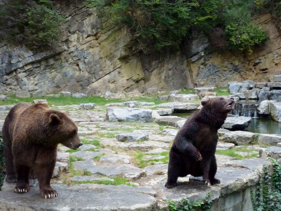 bears SmadarHalperinEpshtein