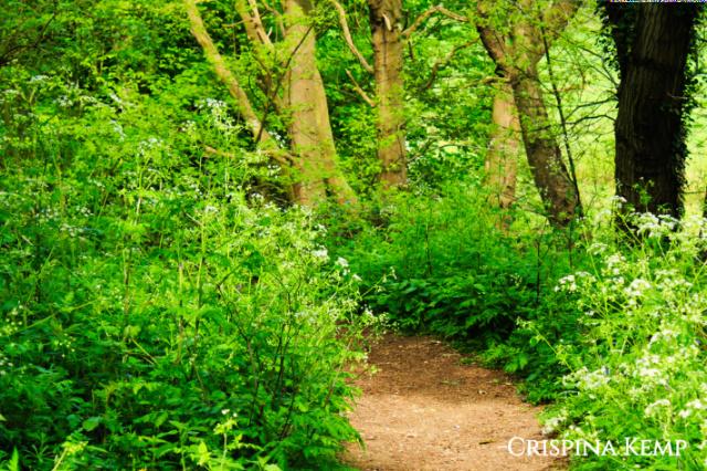 ccc118-woods